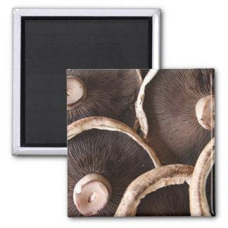 Portabella Mushrooms Foodies 2 Inch Square Magnet