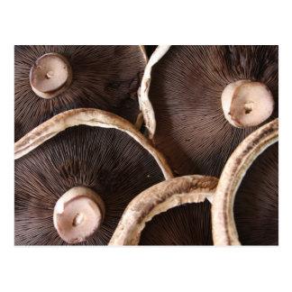 Portabello Mushrooms Postcard