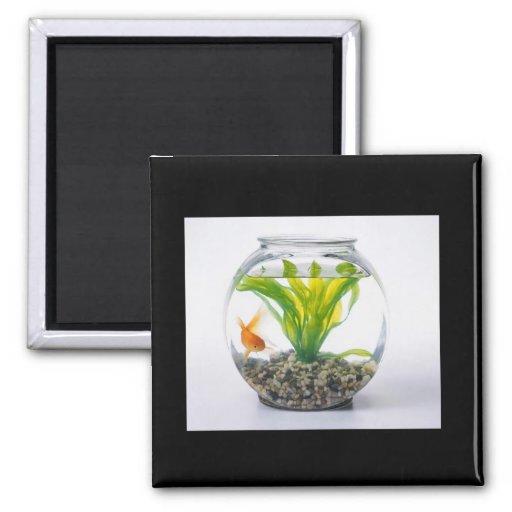 Portable Fish Tank 2 Inch Square Magnet Zazzle