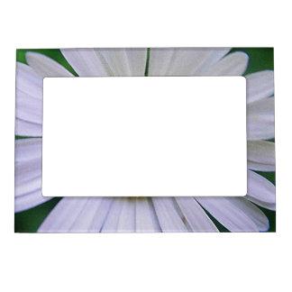 Portarretrato de imán de margaritas blancas marcos magneticos para fotos
