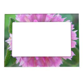 Portarretrato de imán Kleeblüte rosa Marcos Magnéticos De Fotos