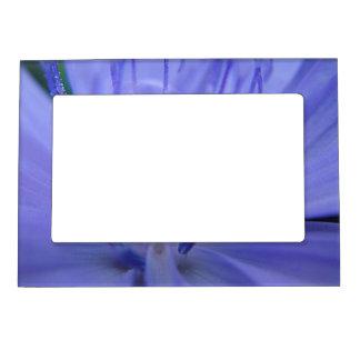 Portarretrato flor azul marcos magnéticos para fotos