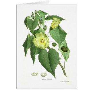 Portia Tree Greeting Card