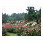 Portland Rose Garden. Post Card