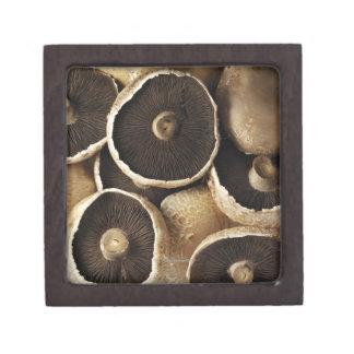Portobello Mushrooms on White Background Gift Box
