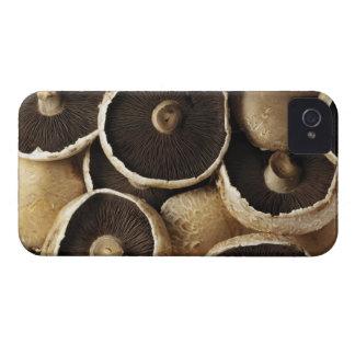 Portobello Mushrooms on White Background iPhone 4 Case-Mate Cases