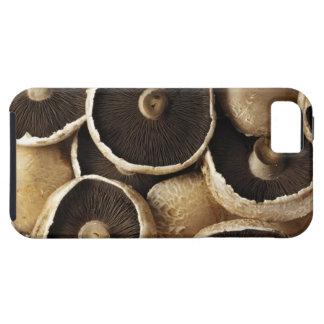 Portobello Mushrooms on White Background iPhone SE/5/5s Case