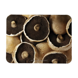 Portobello Mushrooms on White Background Magnet