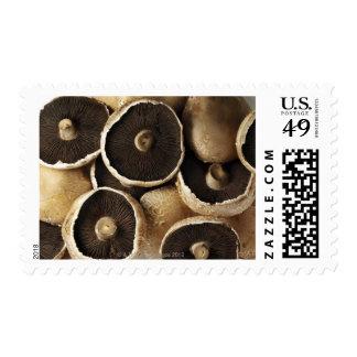 Portobello Mushrooms on White Background Postage Stamp