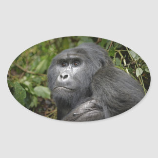 portraet of a silverback mountain gorilla oval sticker