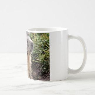 Portrait Alpine Marmot Coffee Mug