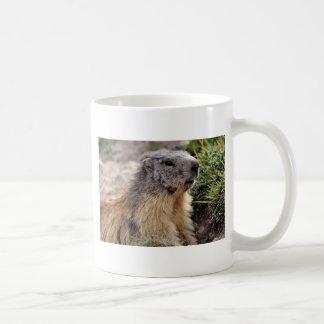 Portrait Alpine Marmot Coffee Mugs
