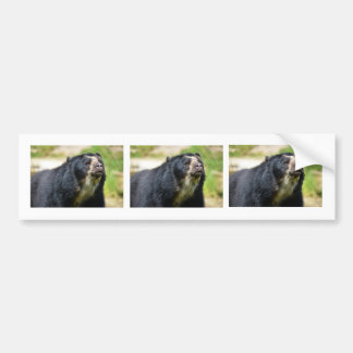 Portrait Andean bear Bumper Sticker