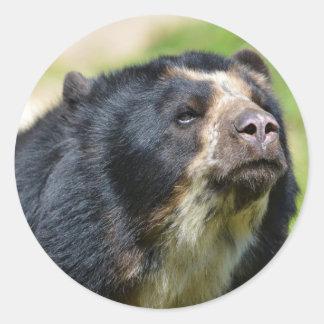 Portrait Andean bear Classic Round Sticker