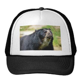 Portrait Andean bear Trucker Hat