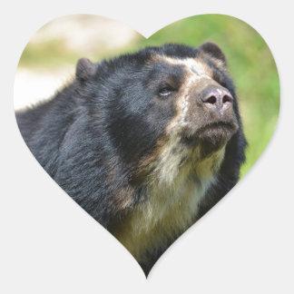 Portrait Andean bear Heart Sticker