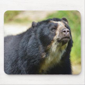 Portrait Andean bear Mouse Pad