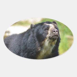 Portrait Andean bear Oval Sticker