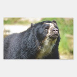 Portrait Andean bear Rectangular Sticker