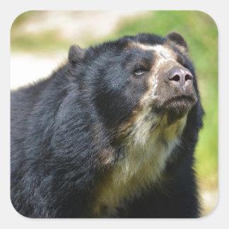 Portrait Andean bear Square Sticker