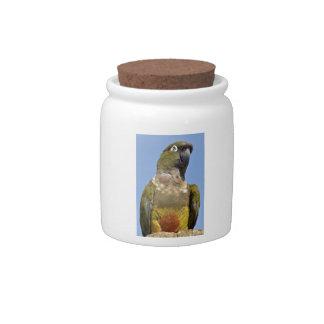 Portrait Burrowing Parrot Candy Dishes