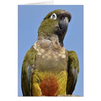 Portrait Burrowing Parrot Greeting Card