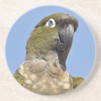 Portrait Burrowing Parrot Coaster