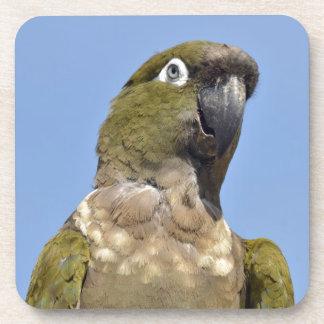 Portrait Burrowing Parrot Beverage Coaster