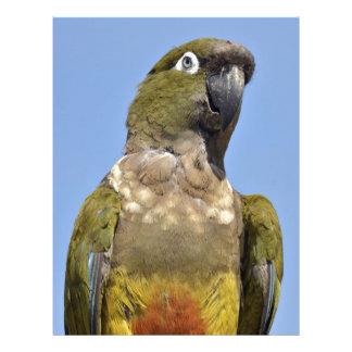 Portrait Burrowing Parrot Letterhead Template