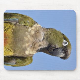 Portrait Burrowing Parrot Mousepads