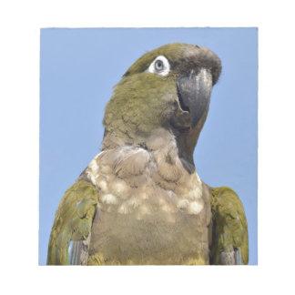Portrait Burrowing Parrot Memo Note Pad