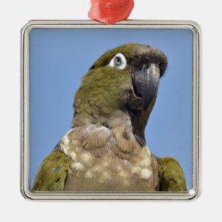 Portrait Burrowing Parrot Christmas Tree Ornament