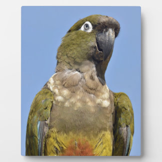 Portrait Burrowing Parrot Display Plaque