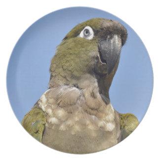 Portrait Burrowing Parrot Party Plates