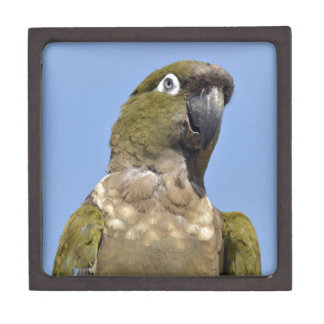 Portrait Burrowing Parrot Premium Trinket Box