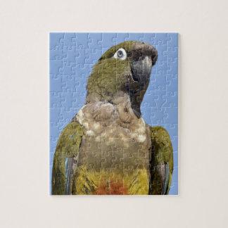 Portrait Burrowing Parrot Jigsaw Puzzles