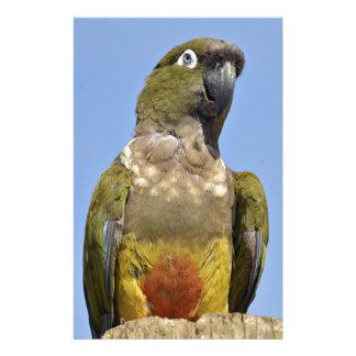 Portrait Burrowing Parrot Stationery Paper
