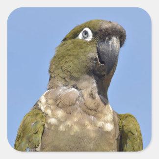 Portrait Burrowing Parrot Sticker