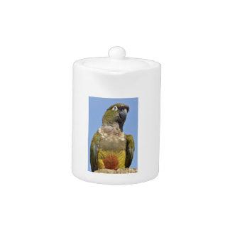 Portrait Burrowing Parrot
