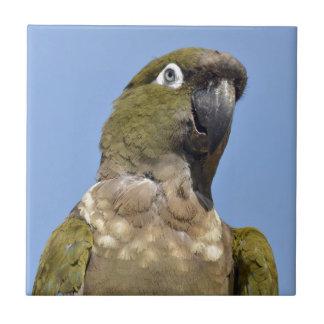 Portrait Burrowing Parrot Tiles