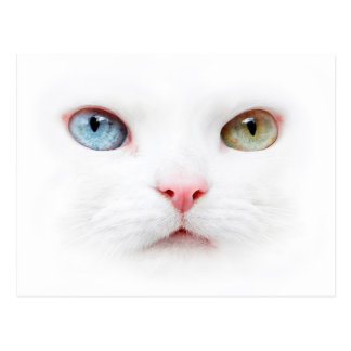 Portrait cat with two-colored eyes odd eyed postcard