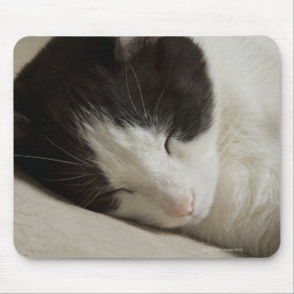 Portrait detail of a domestic cat sleeping mouse pad