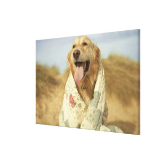 Portrait dog on beach under quilt. Fall Canvas Print
