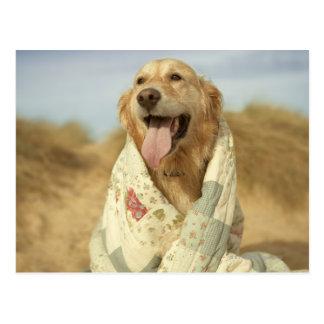Portrait dog on beach under quilt. Fall Postcard