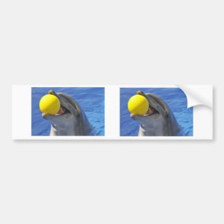 Portrait dolphin with a ball in the mouth bumper sticker