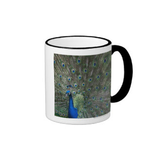 portrait, feathers, colorful, peacock, outdoors, ringer mug