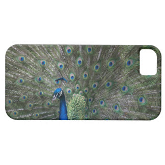 portrait, feathers, colourful, peacock, outdoors, iPhone SE/5/5s case