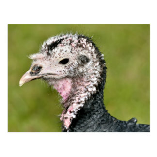 Portrait female turkey postcard