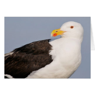 Portrait Great Black-backed Gull Card