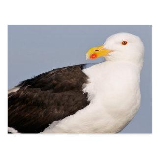 Portrait Great Black-backed Gull Postcard